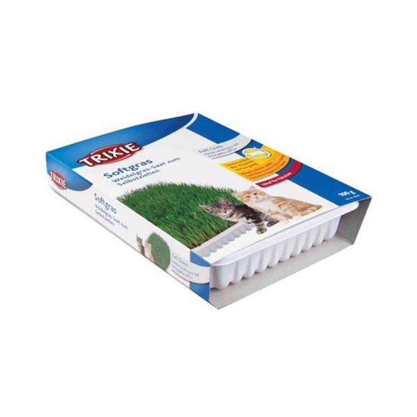 Mjukt kattgräs vitaminberikad, med odlingslåda, ca.100 g